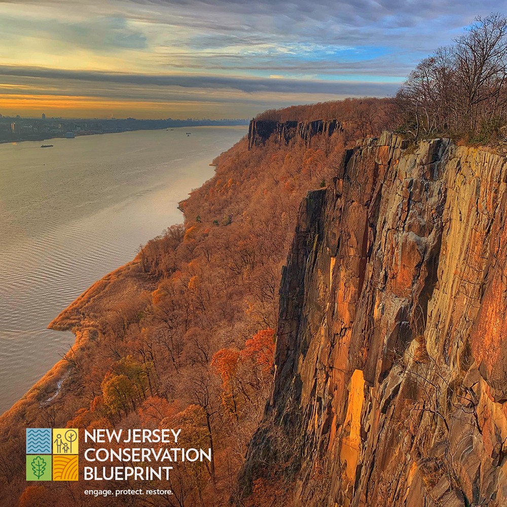 The Nature Conservancy Social Media